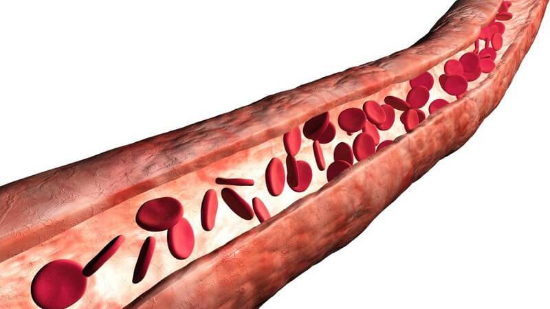 Grafische Darstellung Blutkörperchen in Vene, weißer Hintergrund