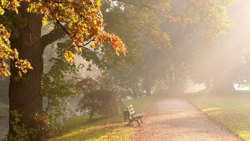 Parkweg am See im Herbst, Morgennebel