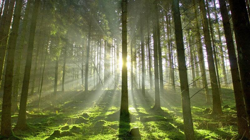 Naturaufnahme Wald im Gegenlicht