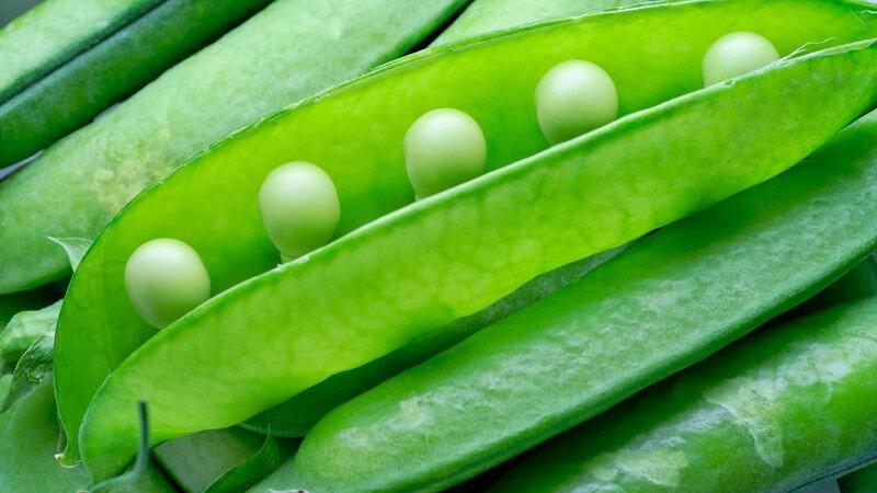 Viele grüne Erbsenschoten liegen aufeinander, eine Erbsenschote ist geöffnet, einige Zuckererbsen sind zu sehen