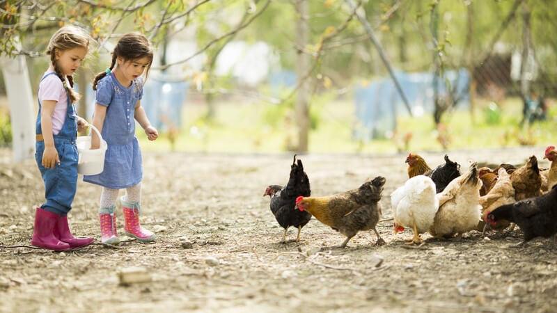 Sommerferien: Zwei kleine Mädchen füttern Hühner auf einem Bauernhof