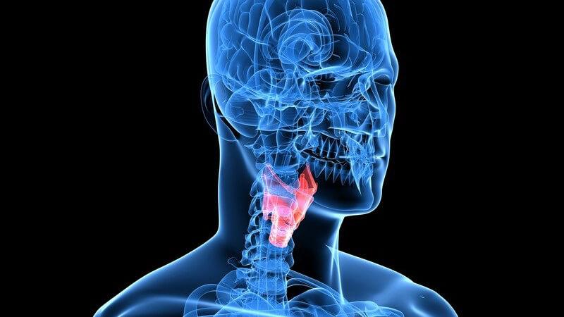Roter Kehlkopf, 3D Grafik Hals und Kopf