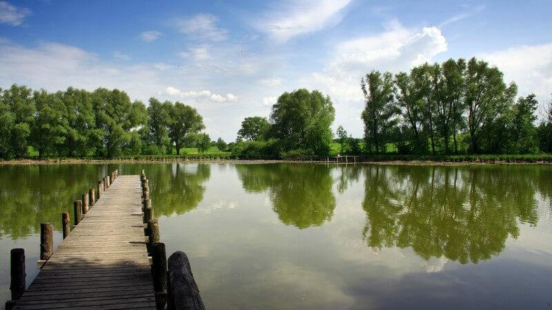 Holzsteg in See, am Ufer Bäume und grüne Wiesen