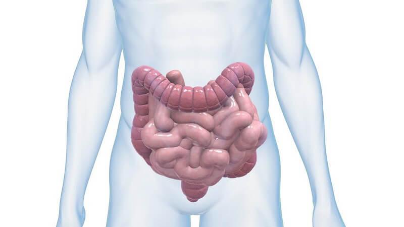 Grafik männlicher Körper mit Dickdarm und Dünndarm