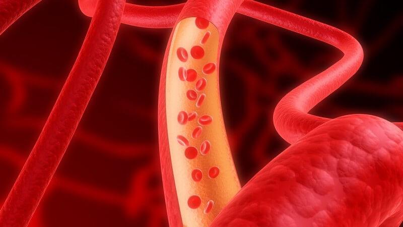 Anatomie - Grafik einer Arterie mit Blutkörperchen