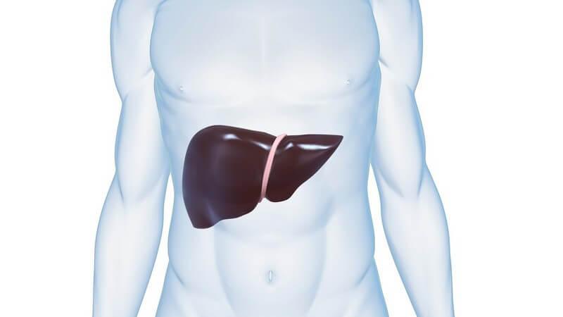 Grafik männlicher Körper mit Leber