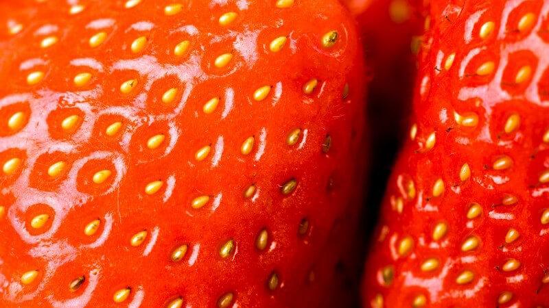 Nahaufnahme frische Erdbeeren