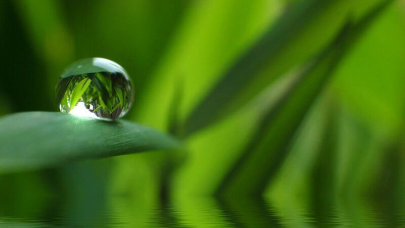 Nahaufnahme Wassertropfen auf grünem Blatt, darunter Wasser