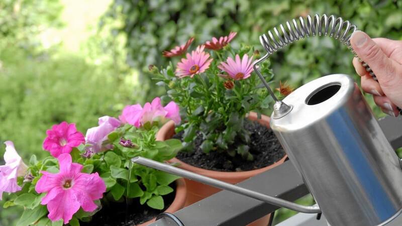 Blumen auf Balkon werden aus Gießkanne begossen