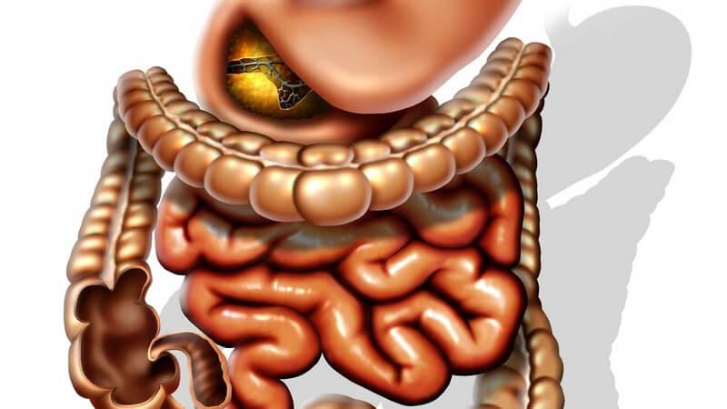 Grafik Magen mit Dünn- und Dickdarm