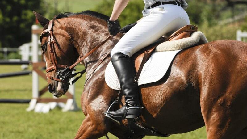Reitsport: Reiter auf Pferderücken, Parcoursreiten