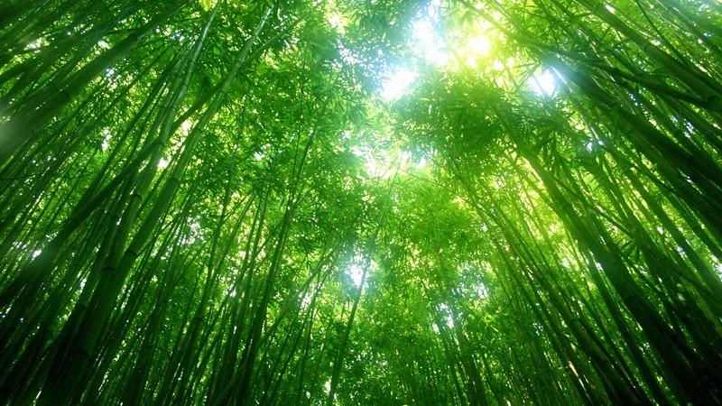 Ansicht  von unten: Licht durchfluteter Wald