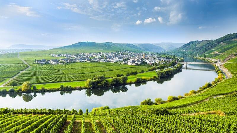 Flussschleife an der Mosel im Weinbaugebiet, Weinberge