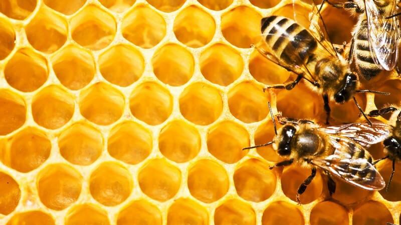 Vier Bienen auf honiggetränkter Honigwabe oder Bienenwabe, von Bienenschwarm
