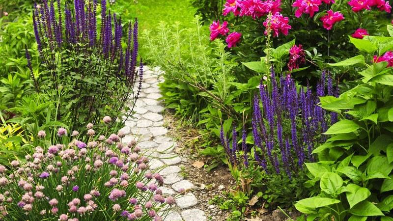 Steinweg durch Garten, am Wegesrand verschiedene bunte Blumen