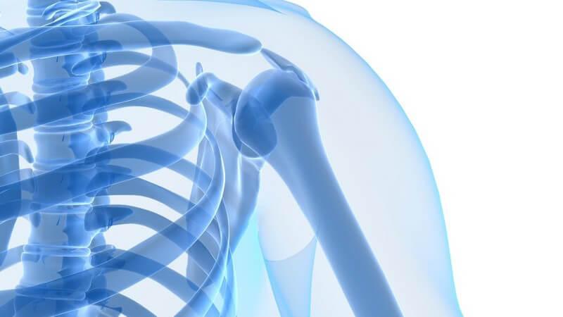 3D Grafik blau Skelett Oberkörper, Schulter in durchsichtigem Körper