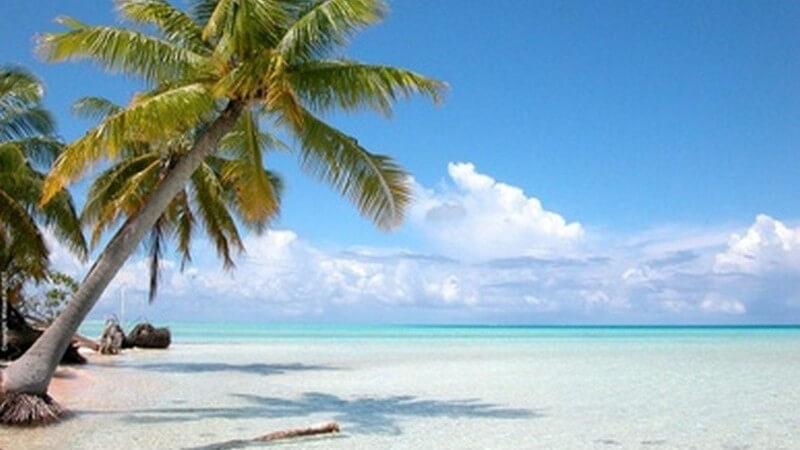 Bahamas - Leerer Strand mit großer Palme und Blick aufs türkisfarbene Meer