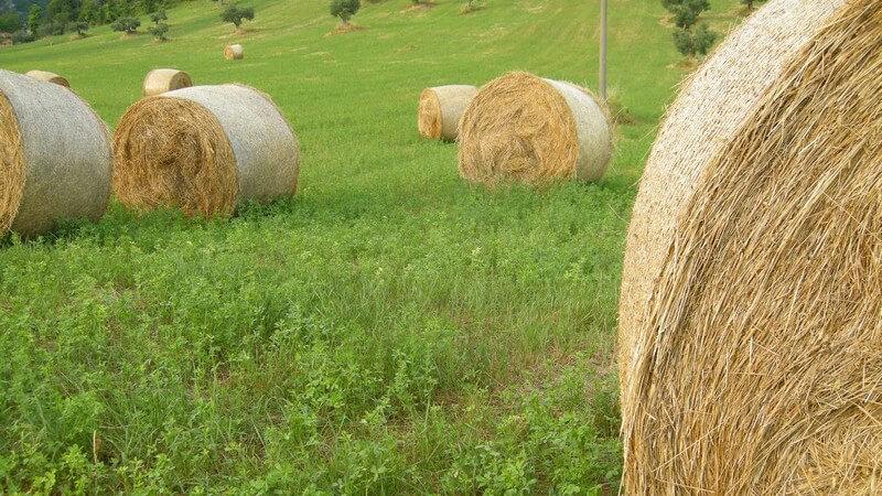 Heuballen von Heuernte mit gemähtem Gras o. Heu, auf grüner Wiese, Bauern, Landwirtschaft