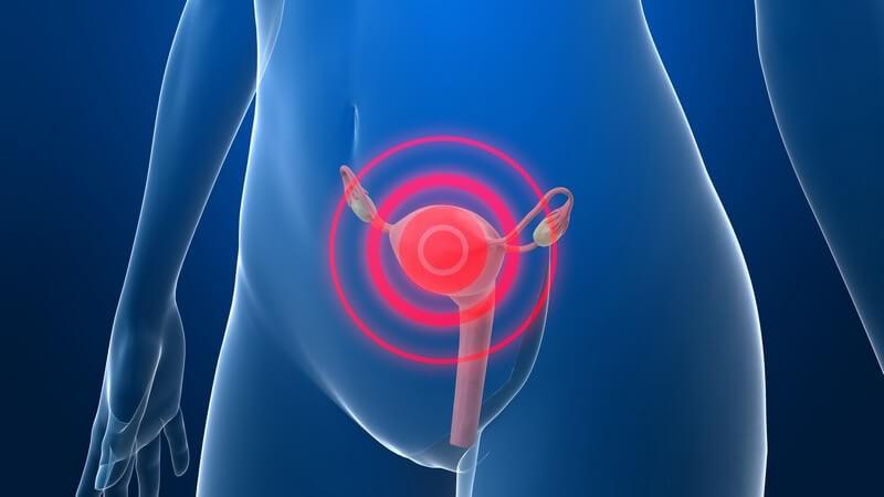 3D Grafik weiblicher Körper, Gebärmutter rot gekennzeichnet