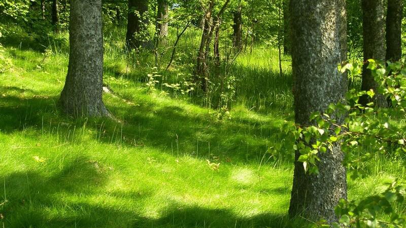 Naturaufnahme Bäume auf grüner Wiese, Sonneneinstrahlung