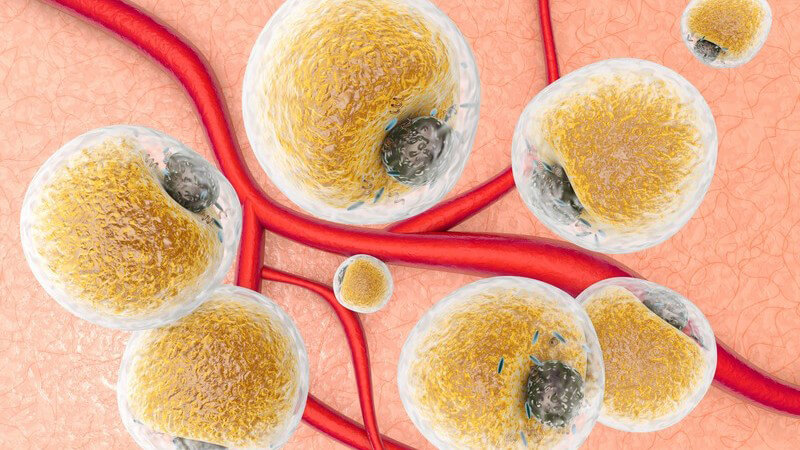 3-D-Grafik des Gewebes mit roten Blutgefäßen und vielen Fettzellen