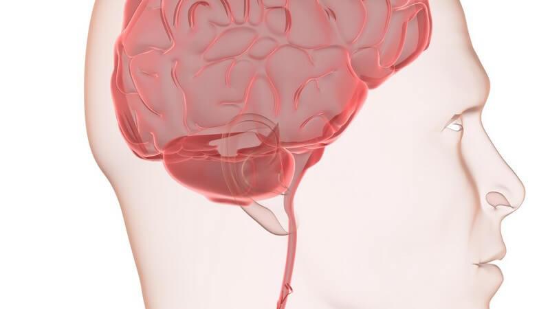 Grafische Darstellung menschliches Gehirn