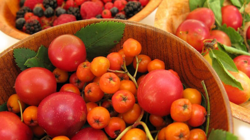 Holzschüsseln mit Früchten: Vogelbeeren, Himbeeren, Johannisbeeren, Pflaumen