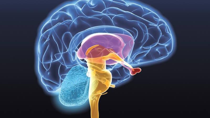 Grafik Gehirn auf schwarzem Hintergrund