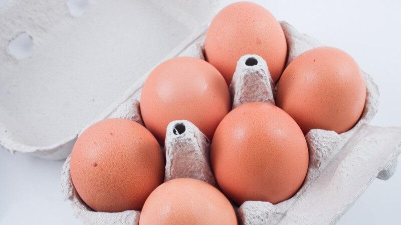 Sechs frische Eier im Karton
