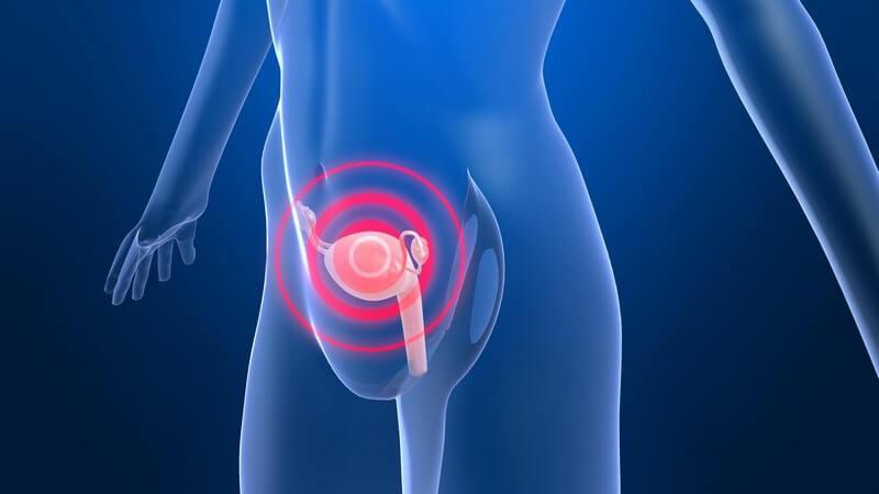 Grafik 3D weiblicher durchsichtiger Körper, schmerzende Gebärmutter rot gekennzeichnet