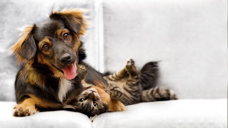 Hundewelpe und Katzenbaby zusammen auf der Couch