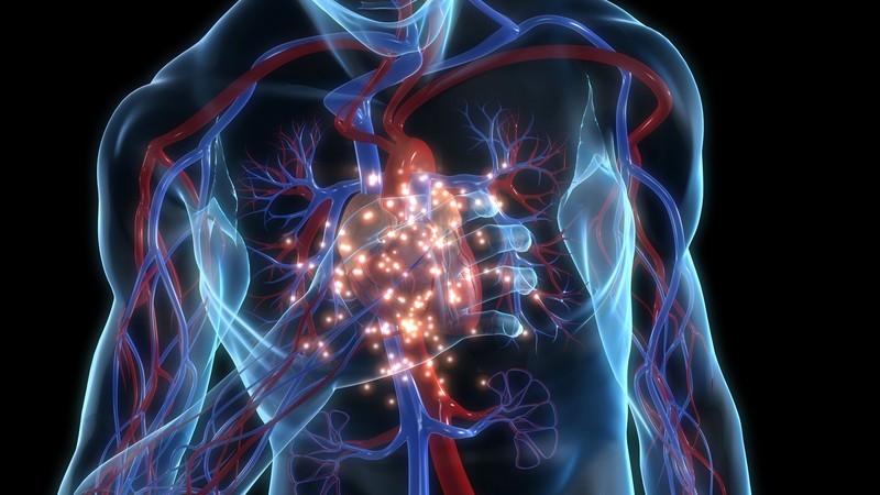 3D Grafik eines durchsichtigen, männlichen Oberkörpers, er fasst sich an leuchtendes schmerzendes Herz