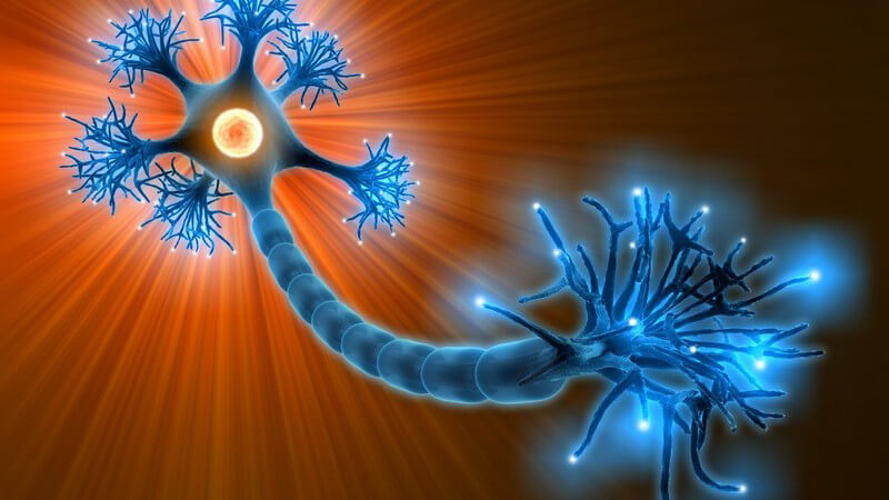 Grafik Neuronen