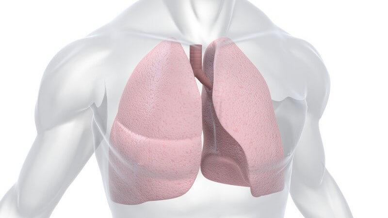 Grafik menschlicher Körper, Lungen rot gefärbt