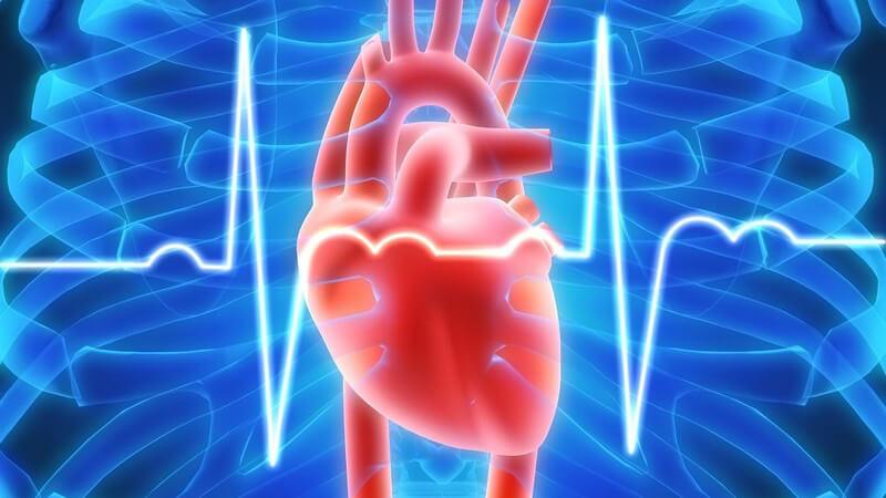 Grafik Herz in blauem Brustkorb, EKG Herzschlag