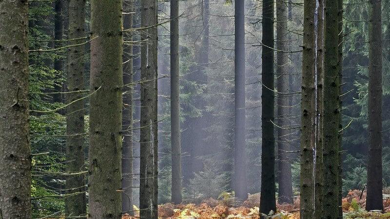 Landschaftsbild Waldlichtung in Oesede