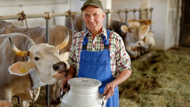 Bio-Bauernhof: Bauer mit Milchkrug, neben ihm Kühe