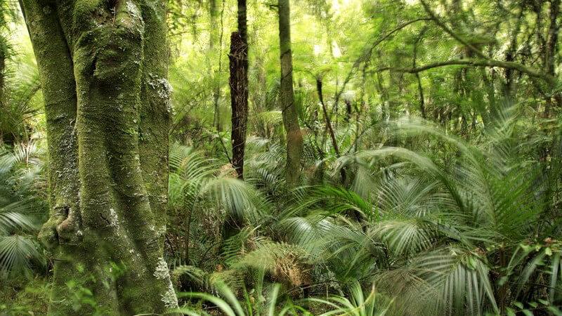 Ausschnitt tropischer Wald