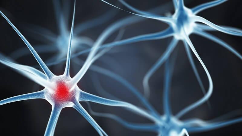 Grafik mit Neuronen (Nervenzellen) im Gehirn, rot markiert
