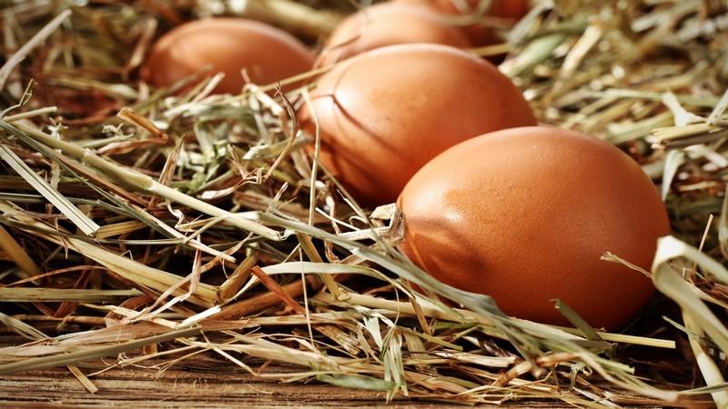 Braune Eier liegen im Stroh