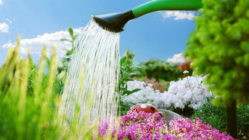 Blumen im Garten werden mit Gießkanne begossen