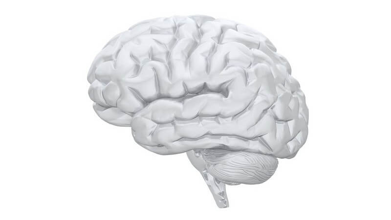 Grafik weiß, menschliches Gehirn von der Seite