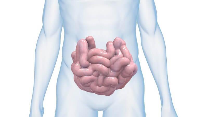 Grafik männlicher Körper mit Dünndarm, weißer Hintergrund