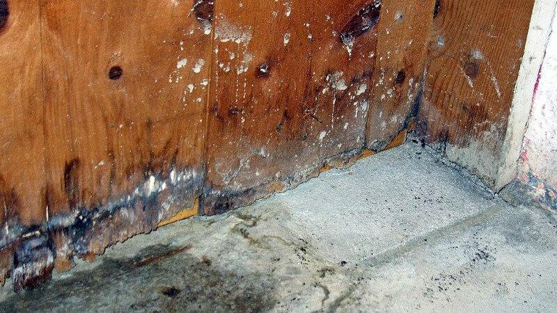 Keller Holztür nach Wasserschaden, Schimmel, Feuchtigkeit