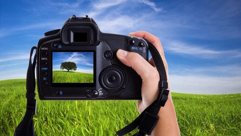 Ansicht durch Digitalkamera, Baum auf Wiese wird fotografiert