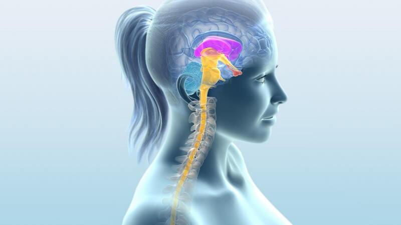 Seitenansicht Grafik Frauenoberkörper, Gehirn bunt dargestellt