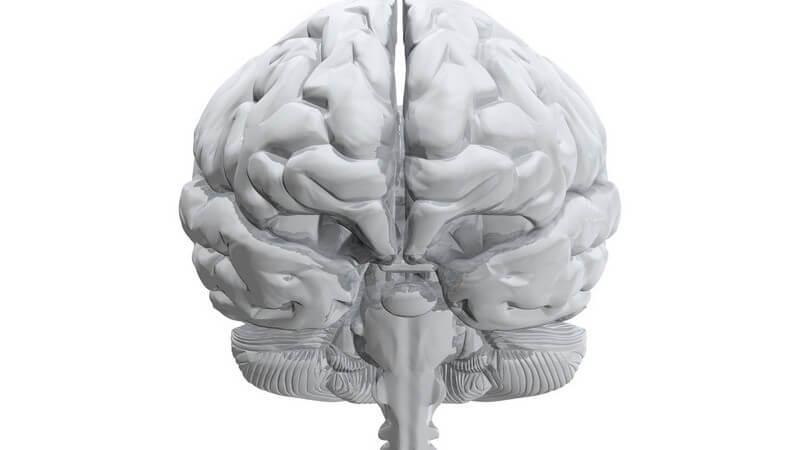 3D Grafik menschliches Gehirn auf weißem Hintergrund