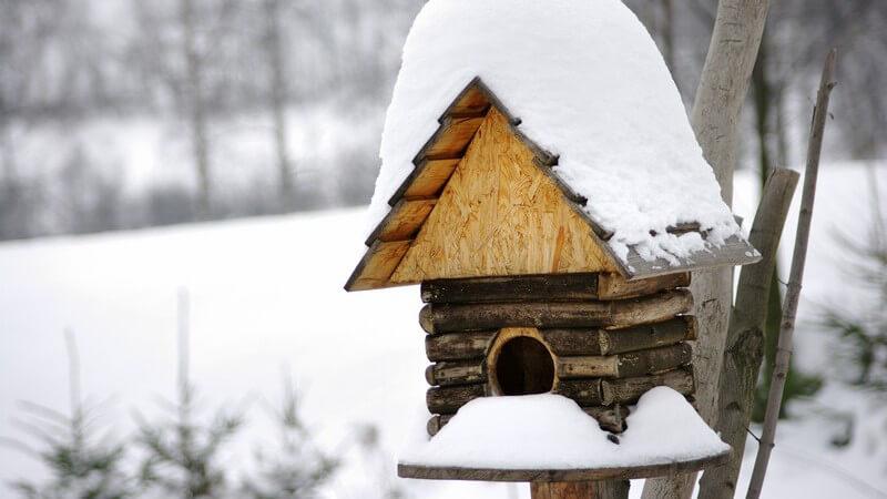 Vogelhäuschen im verschneiten Wald im Winter