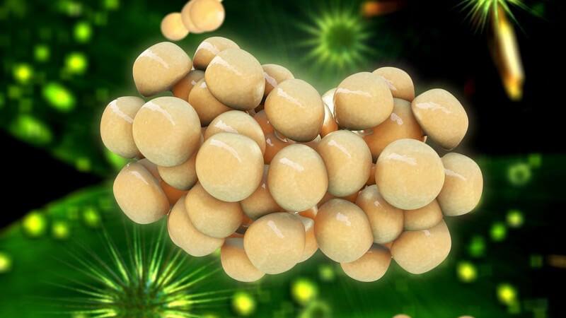 3-D-Grafik einer Gruppe von Fettzellen vor grünem Hintergrund