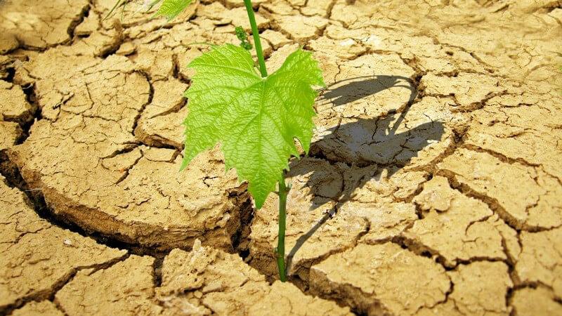 Junge Pflanze wächst aus trockenem, bröckeligem Boden